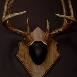 Antler Mount Kit- Laser Engraved Deer - Bear Scents