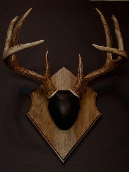 Antler Mount Kit- Outfitter Deer