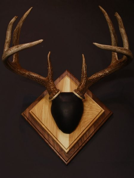 Bear Scents Antler Mount Kit- Legends Deer - Bear Scents