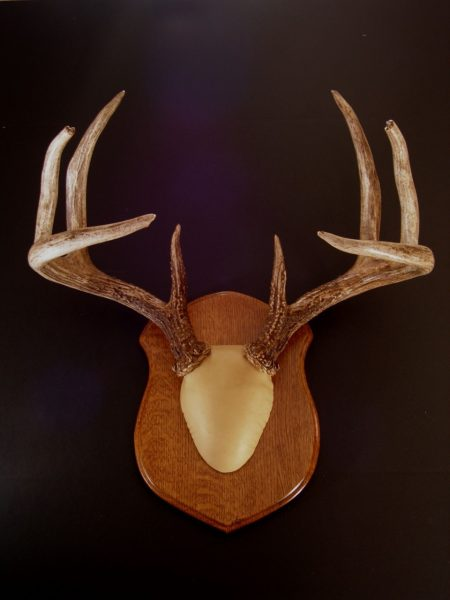 Antler Mount Kit- Classic Deer - Bear Scents