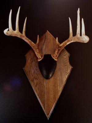 Antler Mount Kit- Classic Euro Deer - Bear Scents