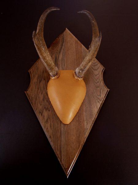 Classic European Antler Mount Kit -Antelope - Bear Scents