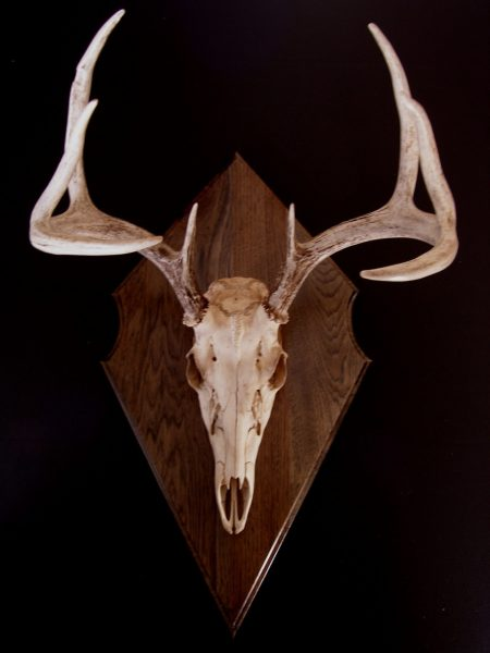 Antler Mount Kit- Classic Euro Deer - Bear Scents