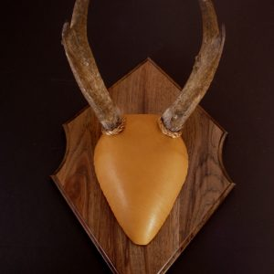 Antler Mount Kit- Outfitter Deer - Bear Scents