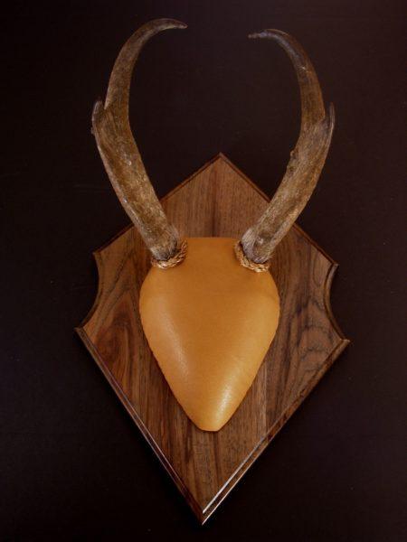 Antler Mount Kit- Outfitter Antelope - Bear Scents