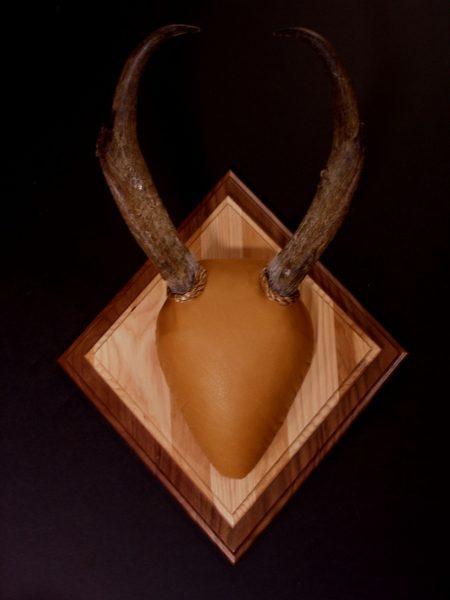 Antler Mount Kit Antelope -Overlay - Bear Scents