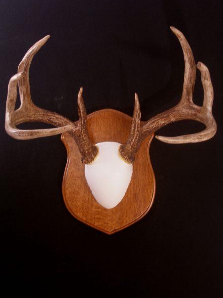 Antler Mount Kit- Classic Deer - Bear Scents
