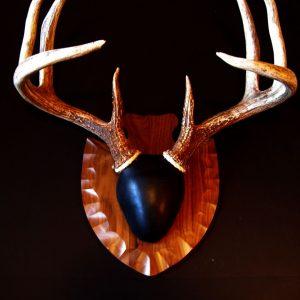 Antler Mount Kit- Traditions Deer - Bear Scents