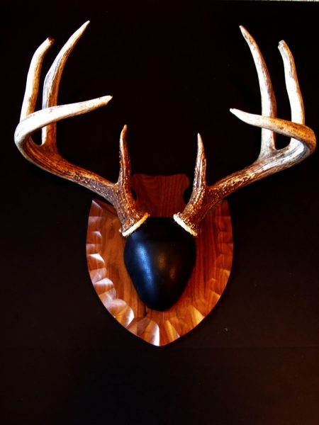 Antler Mount Kit- Arrowhead Deer - Bear Scents