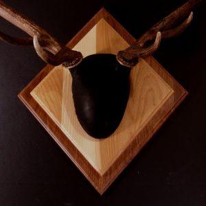 Antler Mount Kit- Outfitter Elk - Bear Scents