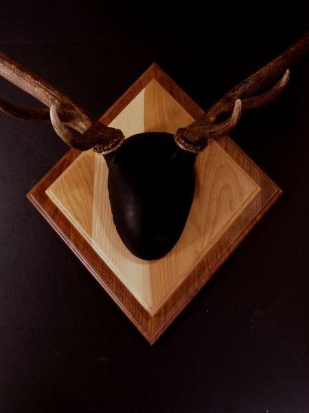 Antler Mount Kit- Overlay Elk - Bear Scents