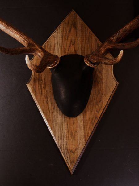 Antler Mount Kit- Outfitter Elk - Bear Scents